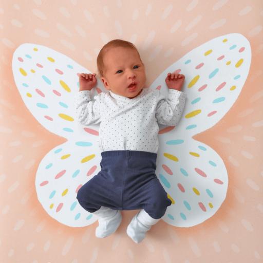 milestone-podlaga-metulj